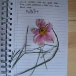 Hyde Park bloem en gras