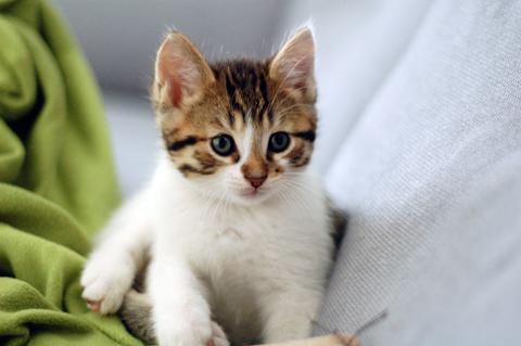 06-kittehs3