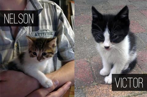 06-kitties
