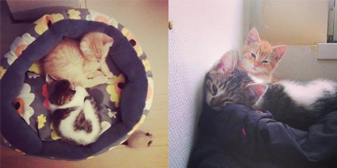 07-kitties1