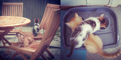 07-kitties3